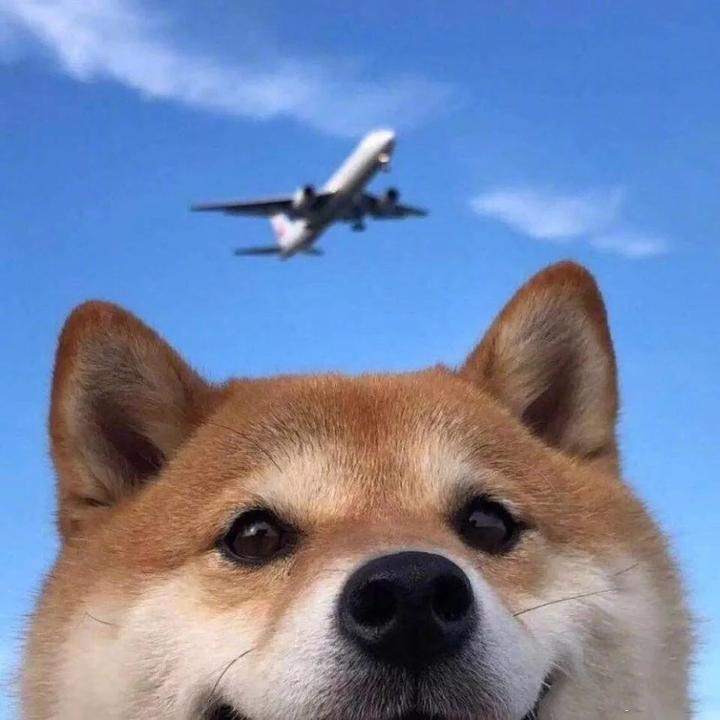 小飞不会飞