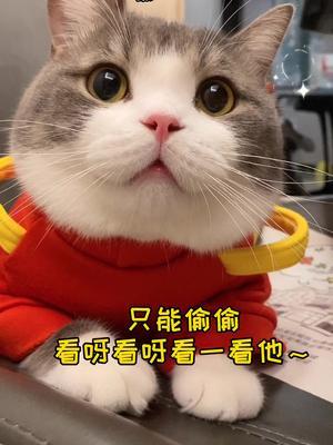 我上辈子一定是做了什么好事   让我拥有一只这么可爱的小猫咪~😆#家有萌猫